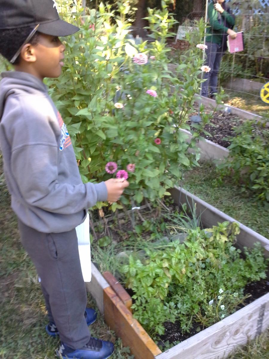 BUGS Garden Starter ioby