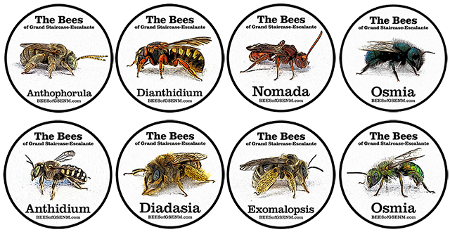 Image of eight different Bee Badges.