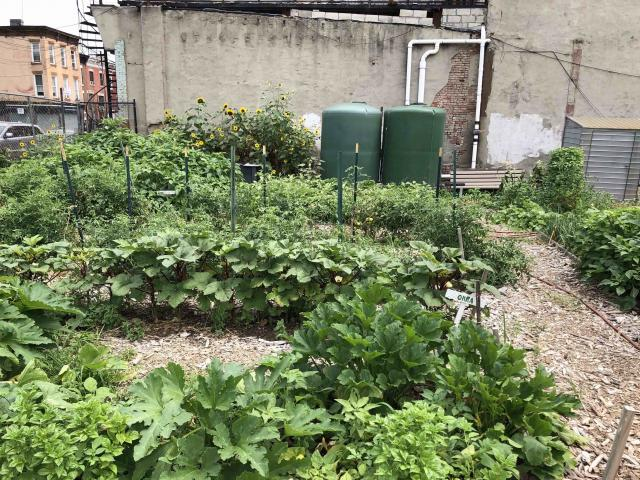 Garden with growing plots and water tanks