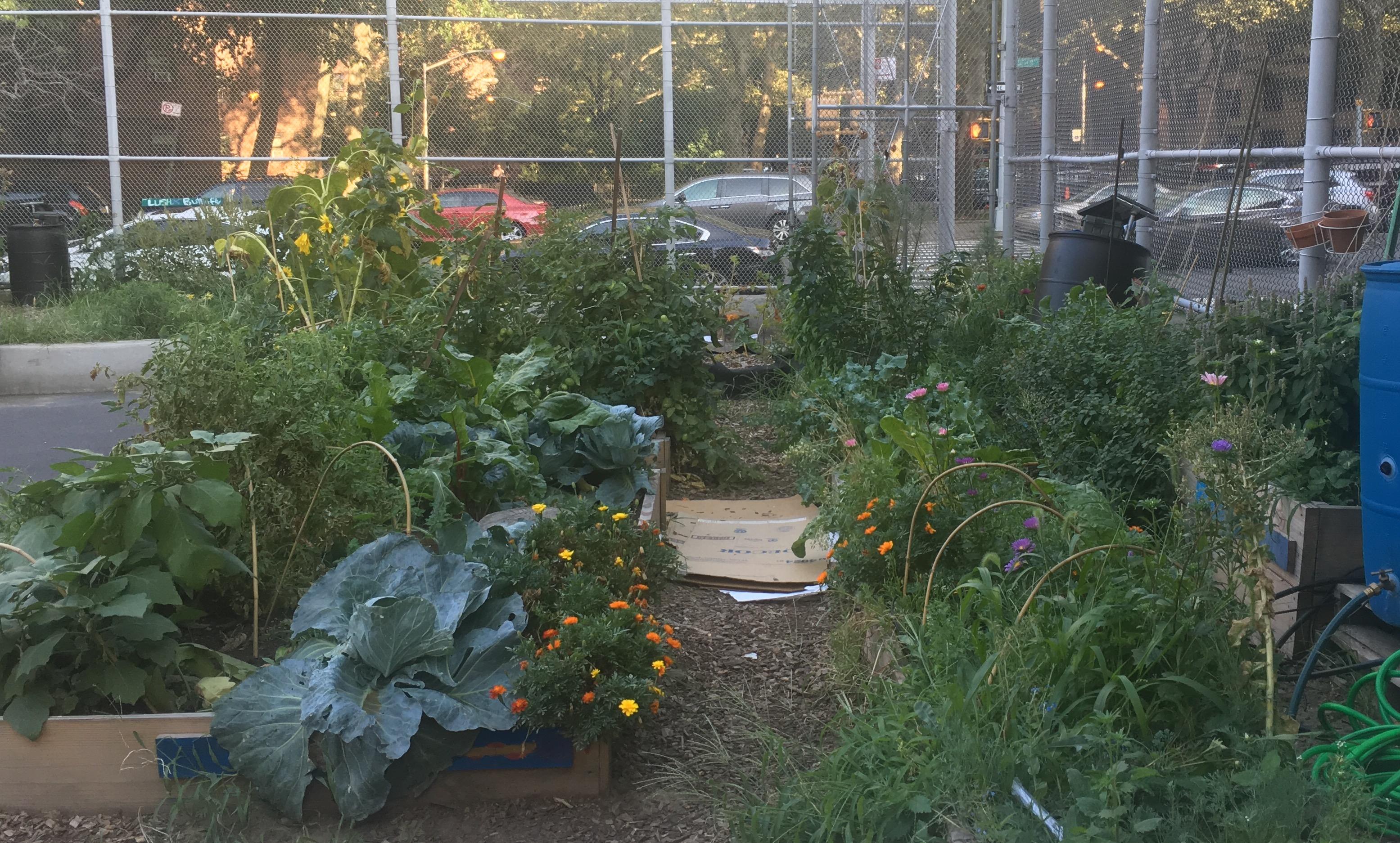 CPE II Garden