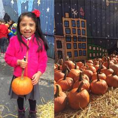 Lucero Garden Pumpkin Patch 2016
