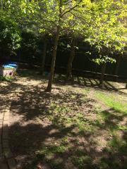 Garden area. Tree.