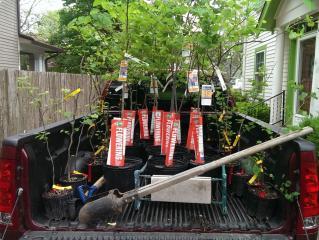 Ready to plant redbuds!