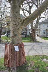 Detroit Shoreway trees