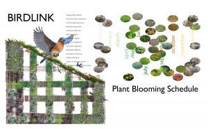 native plants garden BIRDLINK blooming Schedule