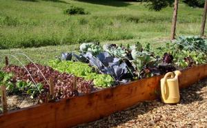 Lachat Giving Garden