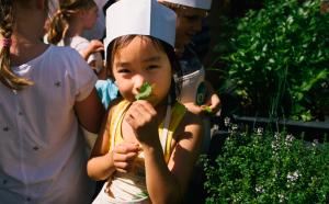 little girl smelling lemon balm