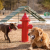 two dogs near a prop fire hydrant